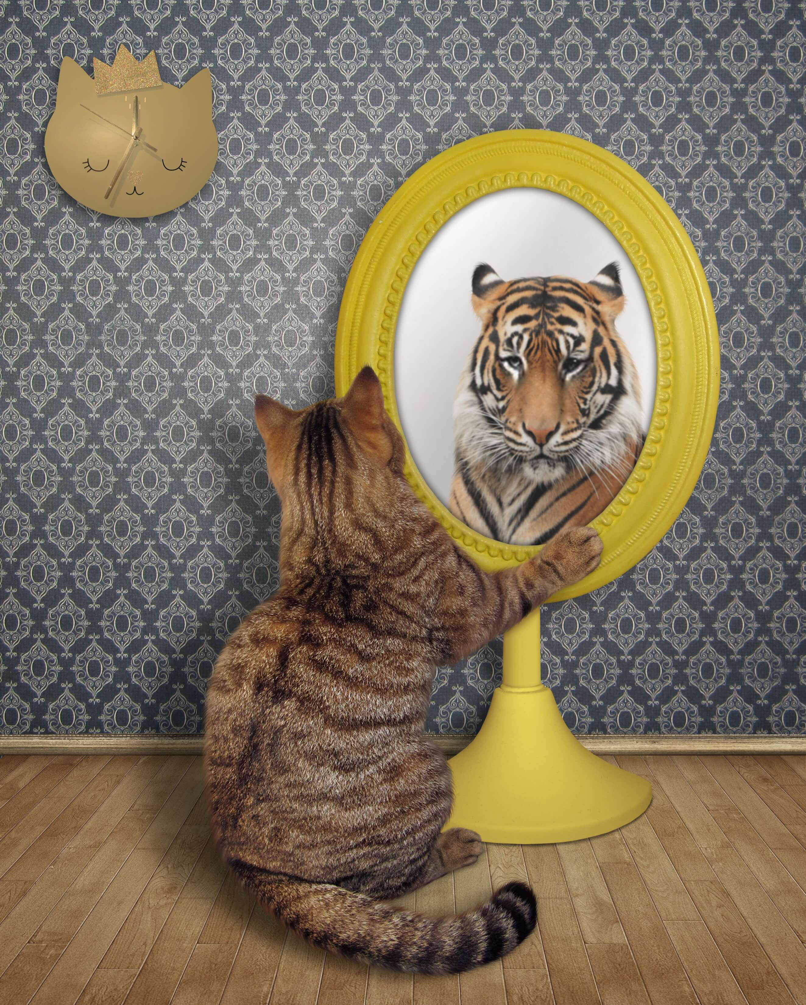 Cat looking in the mirror and seeing a tiger