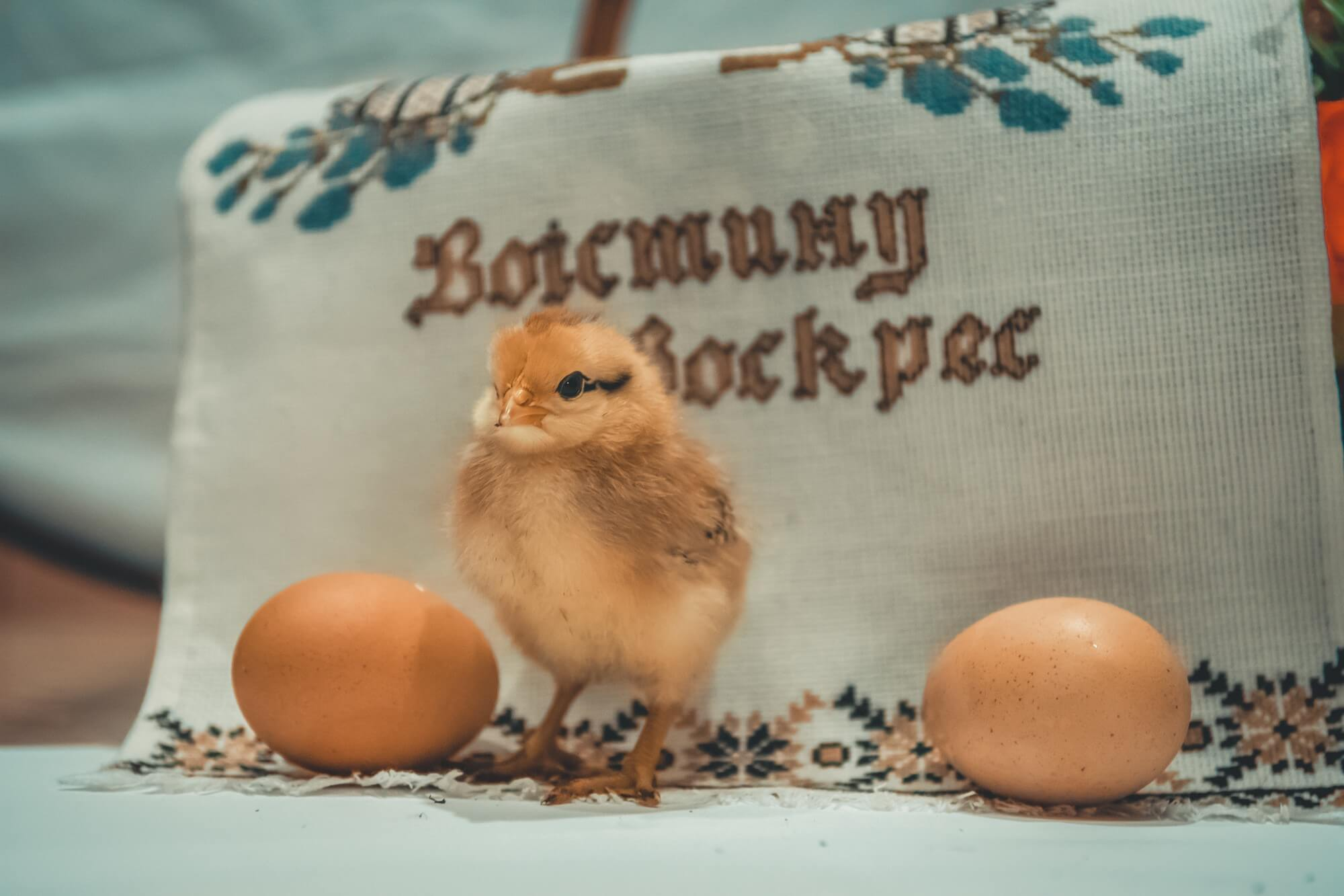 Brown baby chick in front of feed sack with Cyrillic writing surrounded by brown eggs